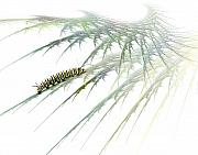 Caterpillar Framed Prints - Wormwood Framed Print by Jan Piller