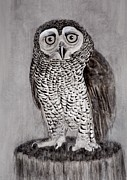 Dana Spring Parish - Worried Owl