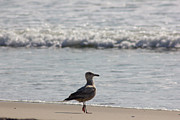 Beach Photograph Photos - Wounded Seagull 3 Hurt Standing on One Leg Beach Photograph Art Seascape Bird Birds Beaches Sea Pics by Pictures HDR