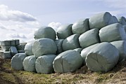 Hay Bales Posters - Wrapped Hay Bales Poster by Mark Williamson