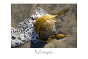 Beach Art Posters - Wrapped Poster by Peter Tellone