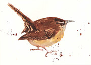 Songbird Paintings - Wren - Cheeky Wren by Alison Fennell