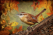 Fall Leaves Photo Originals - Wren in Autumn  by Bonnie Barry