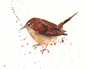 Wren Painting Framed Prints - Wren Watercolor Framed Print by Alison Fennell