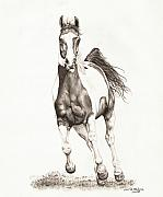 Horse Drawings Framed Prints - Wyatt 1 Framed Print by Lorrie Kalena
