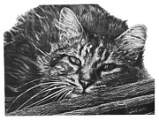 Cherry Grove Drawings Prints - Wyatt Print by Marianne NANA Betts