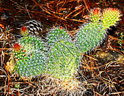 Randall Templeton Art - Wyoming cactus by Randall Templeton