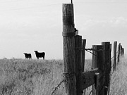 Fence Line Prints - Wyoming fence line Print by David Bearden