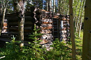 Log Cabins Photo Originals - Wyoming Homestead by Cynthia  Cox Cottam
