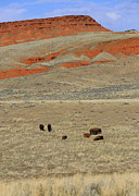 Red Cliffs Prints - Wyoming Red Cliffs and Buffalo Print by Carol Groenen