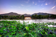 Tree Leaf On Water Photo Prints - Xianghu - Lotus (xiaoshan) Print by Andy Brandl