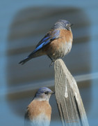 Bluebird Metal Prints - Ya Better Move Metal Print by Ernie Echols