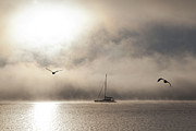 Seabirds Photos - Yacht with gulls in mist by Sheila Smart