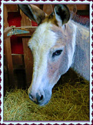 Donkey Digital Art Metal Prints - Yahoo the Mule Metal Print by Mindy Newman