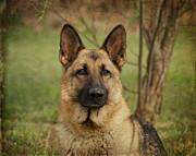 Yahtzee - German Shepherd Print by Sandy Keeton