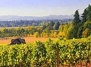 Grapevines Framed Prints - Yamhill County on a sunny day Framed Print by Margaret Hood