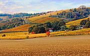 Wine Country Digital Art Prints - Yamhill Valley Vineyards Print by Margaret Hood