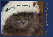 Holiday Cards Photos - Yankee Cat by Joann Vitali