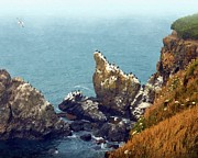 Alice Martin - Yaquina Head Cormorants