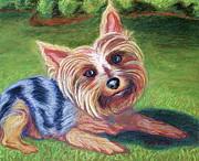 Yard Yorkie Print by D Renee Wilson