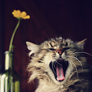 Domestic Animals Art - Yawning Cat by Photo Hélène