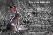 Rabbit Digital Art Prints - Year of the Rabbit 2011 . BW Print by Wingsdomain Art and Photography