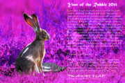 Rabbit Digital Art Metal Prints - Year of the Rabbit 2011 . Magenta Metal Print by Wingsdomain Art and Photography