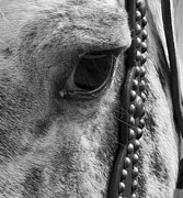 Canter Photos - Year of the Wise by Betsy A Cutler East Coast Barrier Islands