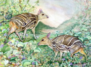 Sri Lankan Artist Paintings - Yello-striped Mouse deer by Sasitha Weerasinghe