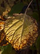 Autumn Foliage Photos - Yellow and Brown by Robert Ullmann