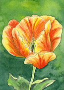 Watercolor Print Posters - Yellow and orange Tulip Poster by Cherilynn Wood