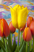 Dew Prints - Yellow and Orange Tulips Print by Garry Gay