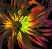 Linnea Tober - Yellow And Red Dahlia2