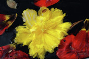 Fine Art  Of Women Paintings - Yellow And Red Flower Painting  by Don  Wright
