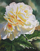 Begonias Posters - Yellow Begonia with Bud Poster by Sharon Freeman