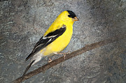 Goldfinch Digital Art Posters - Yellow Poster by Betty LaRue