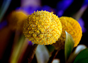 Billy Photos - Yellow Billy Buttons by Julie Palencia