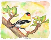 Acuarelas Paintings - Yellow-bird-American-Goldfinch by Carlos G Groppa