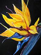 Bird Of Paradise Flower Painting Framed Prints - Yellow Bird Framed Print by Lil Taylor