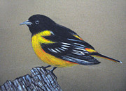 Baltimore Drawings Originals - Yellow Bird by Parivel Murugesan