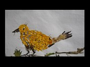 Basant Soni - Yellow-Bird withTwig