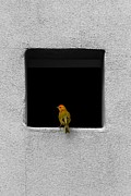 Open Window Framed Prints - Yellow Birdie On The Window Sill Framed Print by Tracie Kaska