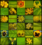 Most Viewed Posters - Yellow Blossoms Poster by Fine Art  Photography