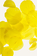 Decor Photography Originals - Yellow by Brad Rickerby