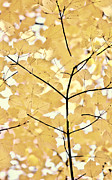 Yellow And Brown Posters - Yellow Brown Leaves Melody Poster by Jennie Marie Schell