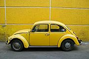 Yellow Bug Print by Skip Hunt