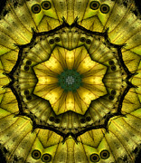 Janeen Wassink Posters - Yellow Butterfly Wing Kaleidoscope Mandala Poster by Janeen Wassink Searles