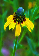 Disk Flowers Posters - Yellow Coneflower Poster by Judi Bagwell