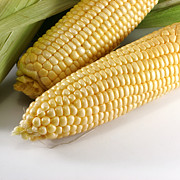 Sweet Corn Farm Prints - Yellow corn Print by Blink Images