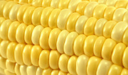 Sweet Corn Farm Prints - Yellow corn macro Print by Blink Images